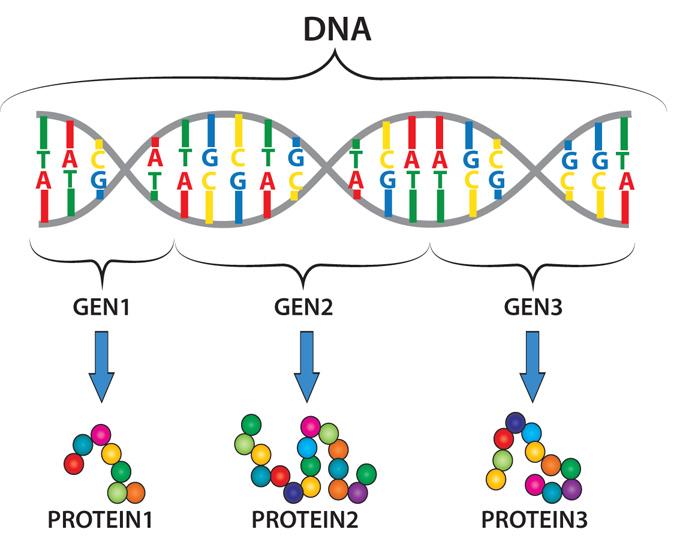 epi_DNA